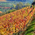 Late Fall in Tuscany