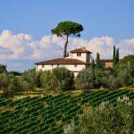Why are Brunello Wines So Distinctive?