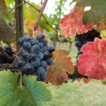 Fall Events in Tuscany
