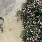 Pasqua, or Spring in Tuscany