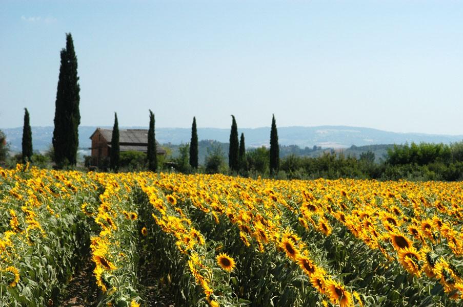 Tuscany, the Perfect Movie Set