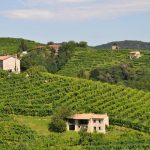 Super Tuscans...Are They As Super As Their Name?