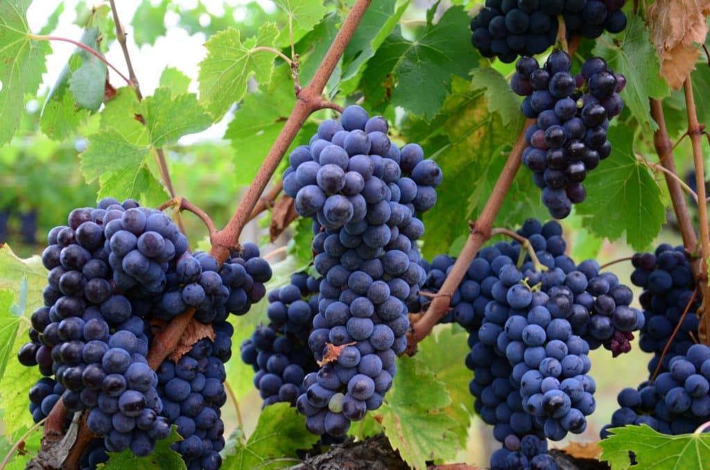 brunnello best tuscan wine